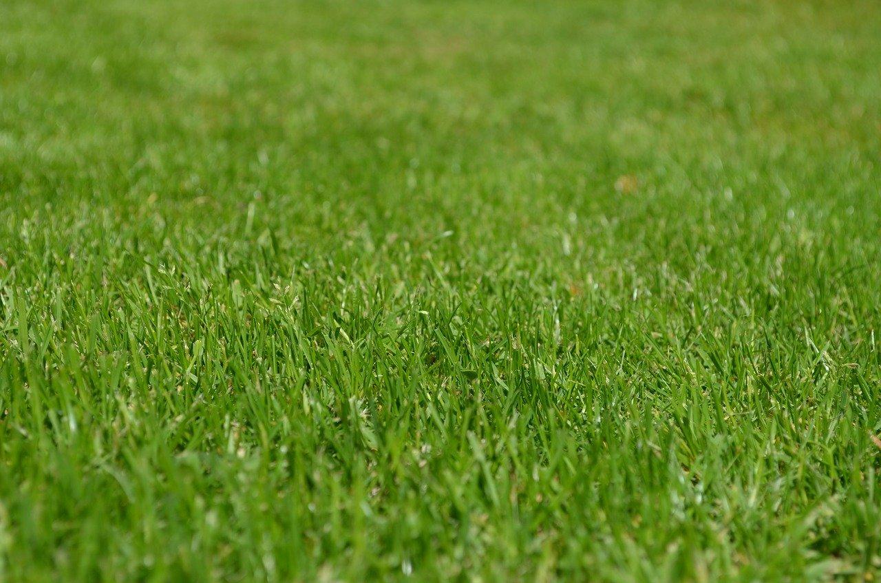 grasses, lawn, garden